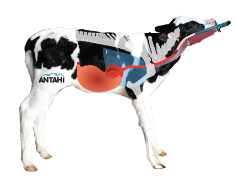 calf-with-logo_480x.png